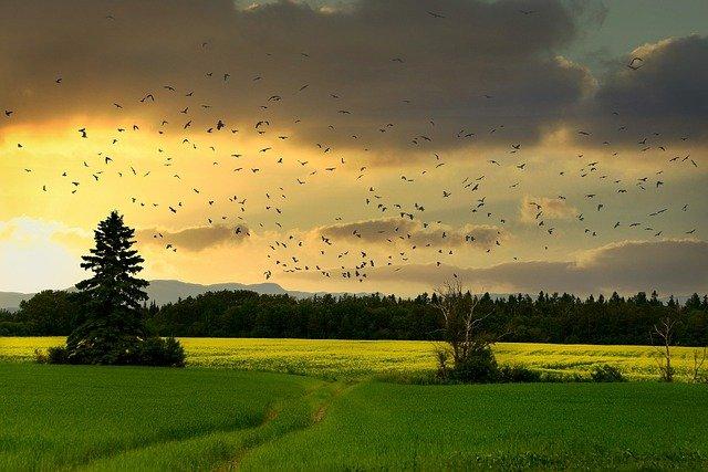 https://pixabay.com/photos/countryside-birds-sunset-landscape-6633849/